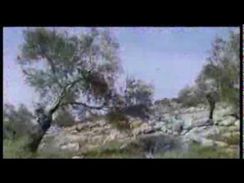 """Visiting Palestine"" (Italian subtitles)"