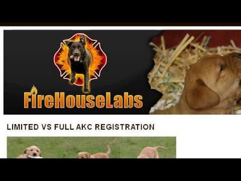 Akc registration papers online