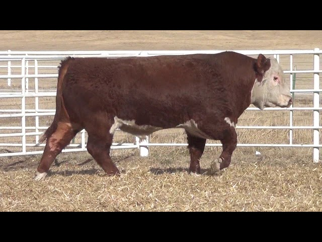 Express Ranches Lot 207