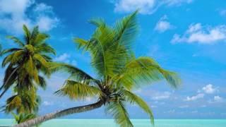 椰子の実 鮫島有美子