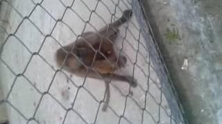 monkey in d.g.khan zoo