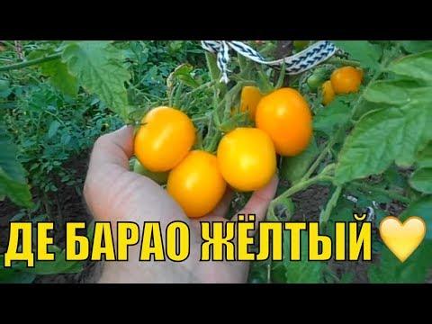 Урожайные сорта томатов (2-ая часть). Де Барао желтый и  Де Барао царский.