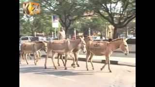 22 Donkeys With