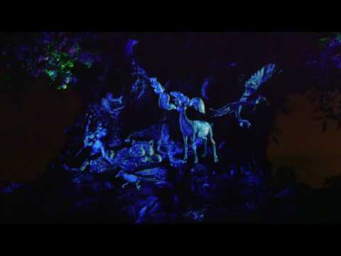Drones surround the Tree of Life at Disney's Animal Kingdom