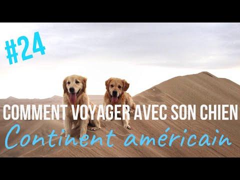 # 24 // COMMENT VOYAGER avec son CHIEN // Continent Américain // Raised on the Road