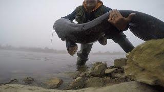 big catfish sava river
