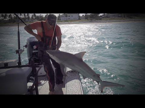 Blacktip Shark {Catch Clean Cook} Juicy Shark Chops