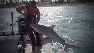 Blacktip Shark {Catch Clean Cook} Juicy Shark Chops