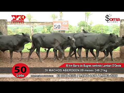 LOTE 50