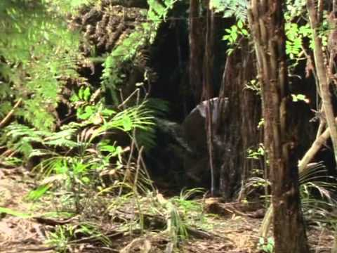 Download Mysterious Island Episode 08   The Price of Vengeance
