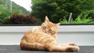 http://kagonekoshiro.blog86.fc2.com/blog-entry-13296.html のせ猫オ...