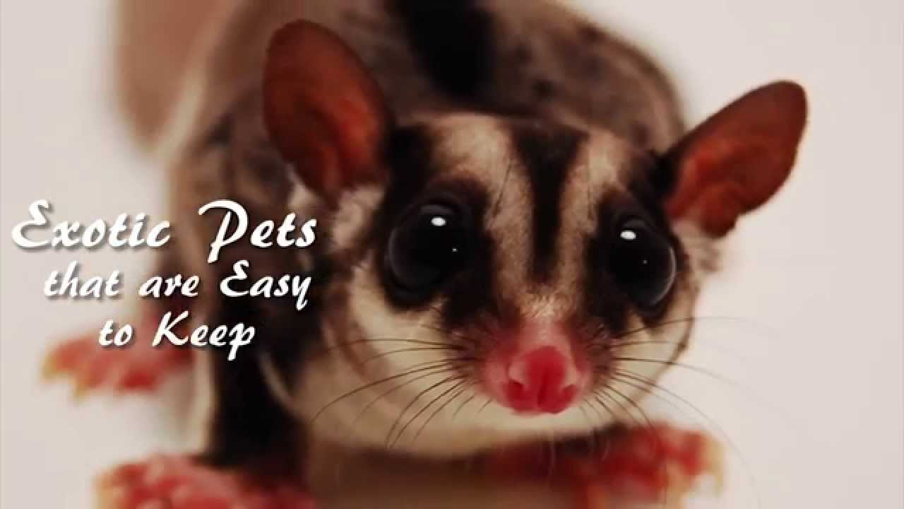 The Best Exotic Pets Youtube
