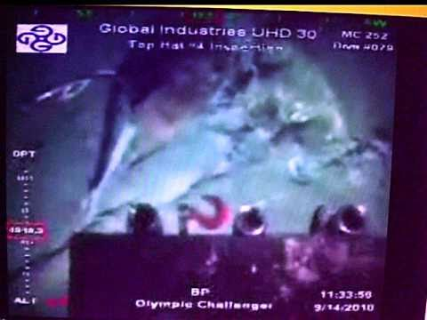 Dolphin Carcass Explodes by BP ROV by Wreckage at Deepwater Horizon Oil Well 9/14/10