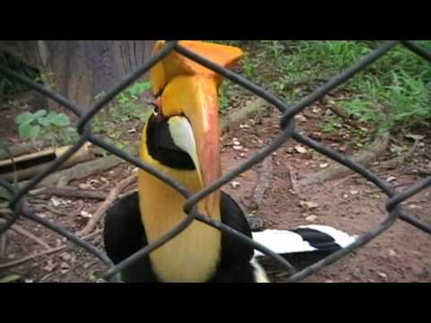 Korat zoo Thailand pt1