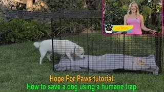 Hope For Paws tutorial: How to save a dog using a humane trap.