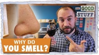 Why Do You Smell?