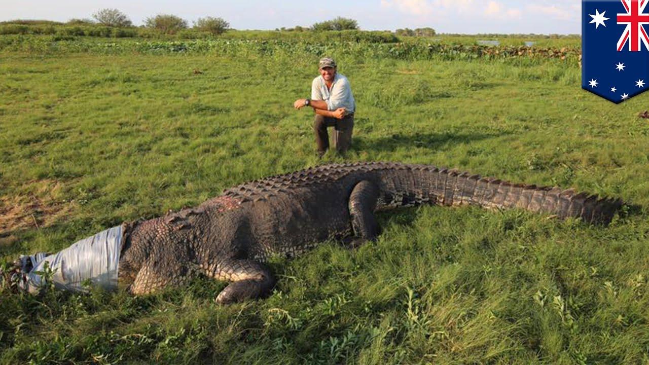 Download Giant crocodile: Outback Wrangler Matt Smith catches monster croc in Australia - TomoNews