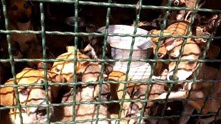 Активисты: харьковское коммунальное предприятие истребляет животных