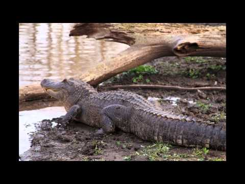 Mississippi Delta Wildlife