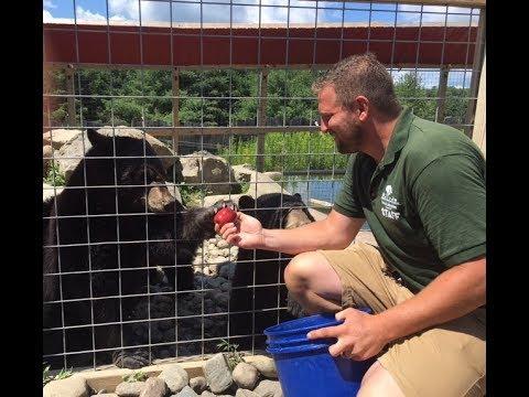Animal Adventures with Jordan: American Black Bears
