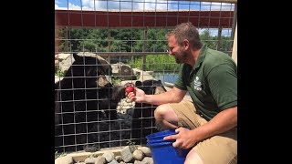 Animal Adventures with Jordan: American Black Bears