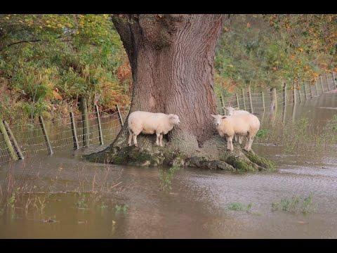 Llanrwst Boxing Day Floods 2015