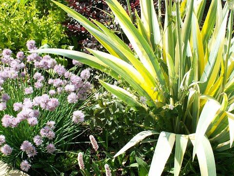 Создайте СВОЙ сад, пусть маленький, но свой! Май после дождя, ароматы по саду, мысли вслух для вас..