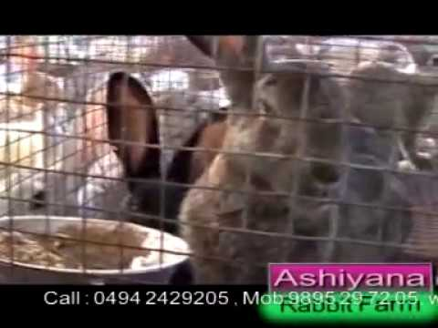 Ashiyana Rabbit farm, Rabbit Farming Class part 1