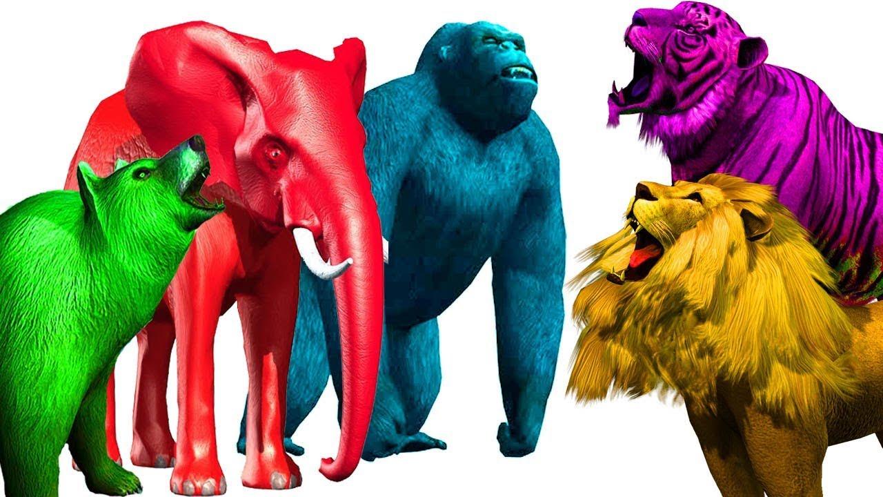 comprar popular 793e0 2ee7e animales salvajes familia de dedos | gorila elefante león tigre colores |  animales rimas