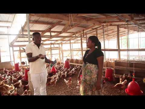 Bentum Family Visit Dr. Edward Asadu Poultry Farms # Asante Akim Agogo