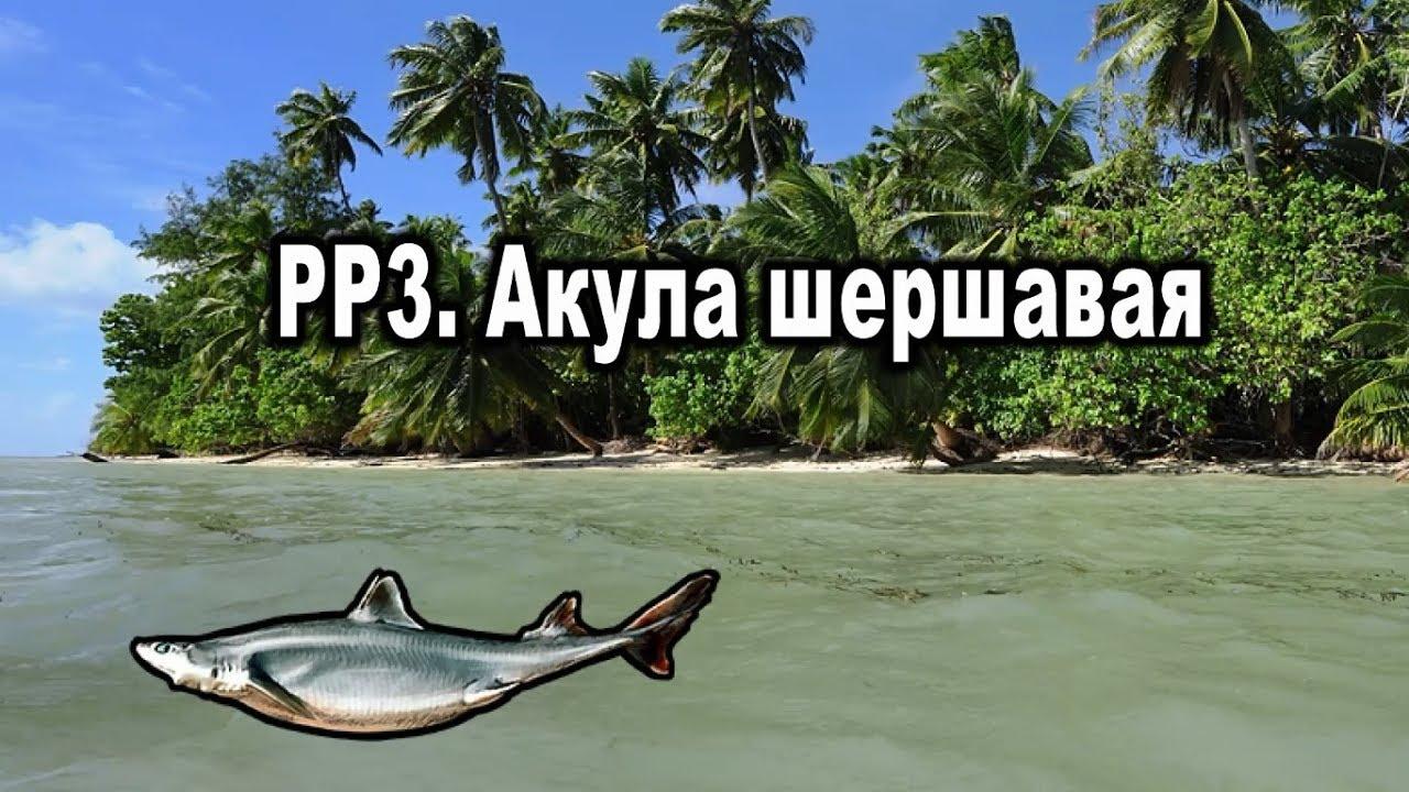 Русская рыбалка 3. Акула шершавая.