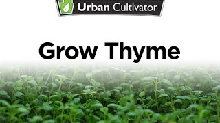 How to grow Thyme Indoors | Urban Cultivator