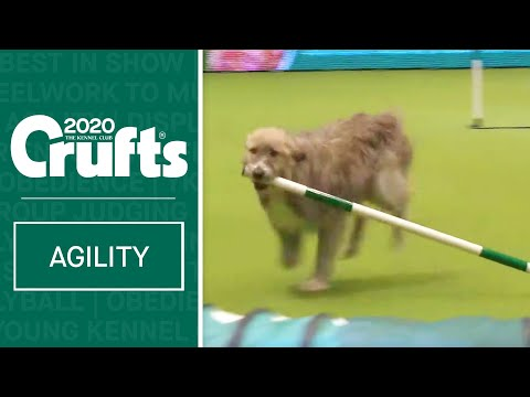 Hilarious Rescue dog Kratu steals the show (and a pole)!