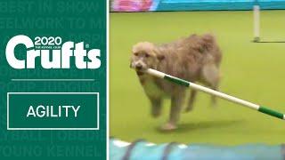Hilarious Rescue dog Kratu steals the show (and a pole)!