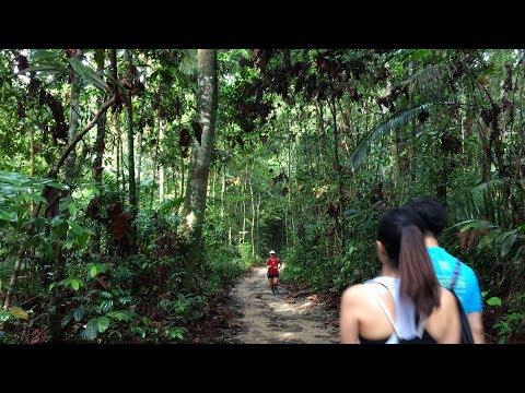 【Nature walk】2018.0127  Treetop walk & Venus trails (windsor)