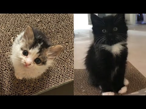 Cute Kittens meowing compilation | cutest kittens will make your day brighter