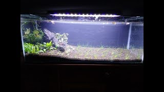 Làm hồ cá thủy sinh nuôi Bảy màu Guppy   Aquarium setup