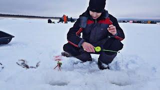 Рыбалка в архангельской области Наконец то морозы ушли