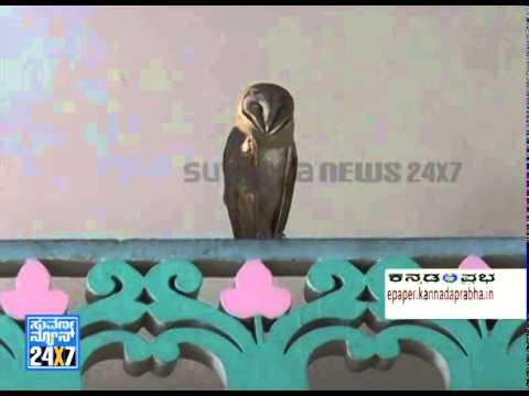 Goobe (owl) in  Vidhana Soudha - ನ್ಯೂಸ್ ಹೆಡ್ಲೈನ್ಸ್ News bulletin 23 Apr 14
