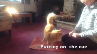 Cat On A Mat Celia Haddon Shows You How She Trained Her Cat Toby The Cross Eyed Stray