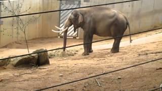 Zoo Praha 8.5.2013 047