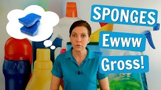 Sponges for House Cleaning or is That Gross?