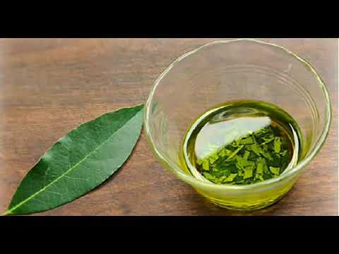 how-to-make-laurel-essential-oil-to-treat-joint-pain,-varicose-veins,-and-headaches@
