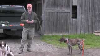 Upland Bird Guide: Part 1: The Dogs