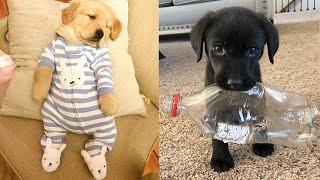 Şirin Yavru Köpek Videoları-Komik ve Eğlenceli(Baby Dogs-Cute and Funny Dog Videos Compilation)9