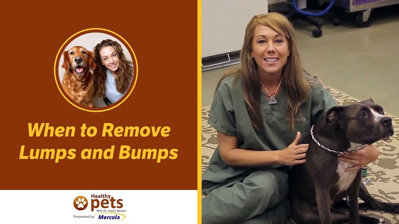 When to Remove Lumps and Bumps of Your Pet
