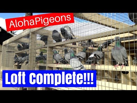 Homing Pigeon Loft Construction Complete!!!