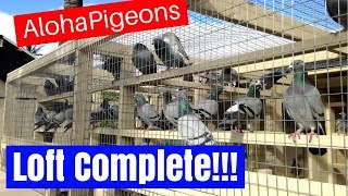 Homing Racing Pigeon Loft Construction Complete!!!