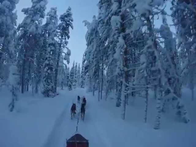 Sledehondentocht (Finland) 2