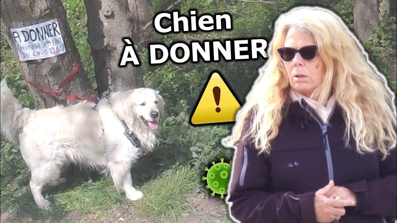 88 Abandonner Son Chien Par Peur Du Covid 19 Youtube